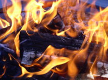 Flames and coals. In a fire Royalty Free Stock Images