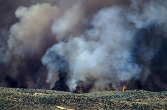 Flames and Dense White Smoke Rising from the Raging Wildfire Stock Photos