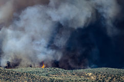 Flames and Dense White Smoke Rising from the Raging Wildfire Stock Images