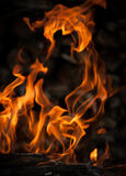 Flames from the fire. Burning wood in fire close-up Royalty Free Stock Photo