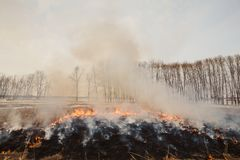 The flames of the fire, rapidly running to the trees. inflammability of the grass in spring and autumn. danger and. Warning Royalty Free Stock Photography