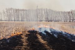The flames of the fire, rapidly running to the trees. inflammability of the grass in spring and autumn. danger and. Warning Royalty Free Stock Photos