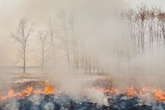 The flames of the fire, rapidly running to the trees. inflammability of the grass in spring and autumn. danger and. Warning Stock Photo