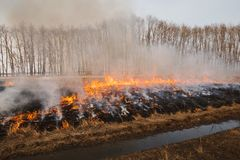 The flames of the fire, rapidly running to the trees. inflammability of the grass in spring and autumn. danger and. Warning Stock Images