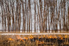The flames of the fire, rapidly running to the trees. inflammability of the grass in spring and autumn. danger and. Warning Royalty Free Stock Image