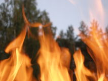 Flames and forest. Summer bonfire evening before the barbecue time with forest background Royalty Free Stock Photography
