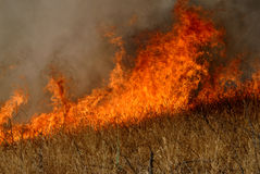Flames and grass. Flames in dry grass field Royalty Free Stock Photography