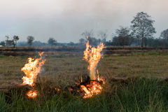 Flames on a grass mound. Flames blaze in a hay bale on a mound of rice which farmers in order to plowing Royalty Free Stock Photos
