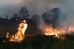 Flames on a grass mound. Flames blaze in a hay bale on a mound of rice which farmers in order to plowing Stock Photo
