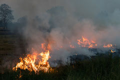 Flames on a grass mound. Flames blaze in a hay bale on a mound of rice which farmers in order to plowing Royalty Free Stock Images