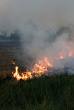 Flames on a grass mound. Flames blaze in a hay bale on a mound of rice which farmers in order to plowing Stock Photography