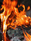 Flames Leap from Campfire. Flames shoot from a pile of wood layered on a raging camp fire. Bright flames scorch the logs and leave traces of embers and sparks royalty free stock images