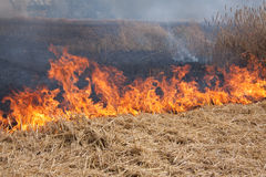 Flames Of A Field Fire Stock Image