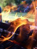 Flames som entwining runt om trä arkivbilder