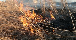 Flames of the tongue of the fire dry grass in the daytime.  Royalty Free Stock Photography