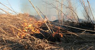 Flames of the tongue of the fire dry grass in the daytime.  Stock Photos