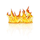 Flames on white. Flames  on white with reflection Royalty Free Stock Image
