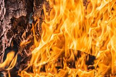 Flames in a wood burning fireplace Stock Images
