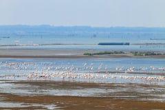flamingów kierdla menchie Po rzeki laguna Fotografia Stock