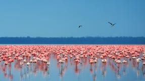flamingów kierdle Zdjęcia Stock