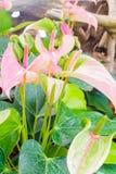 Flamingów kwiaty Obrazy Royalty Free