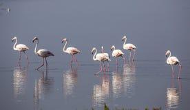 Flamingów odbicia Zdjęcia Royalty Free
