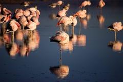 Flamingów odbicia zdjęcie stock
