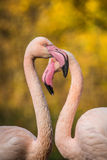 Flamingów portrety Obrazy Royalty Free