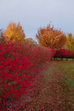 Flaming Autumn Bush Border Stock Images