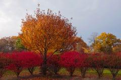 Flaming Autumn Bush Border Royalty Free Stock Photos