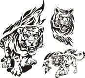 Flaming big cats. Royalty Free Stock Photo