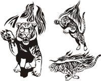 Flaming big cats. Stock Images