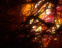 Flaming branches closeup Stock Images