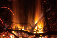 Flaming brushwood closeup Royalty Free Stock Photo