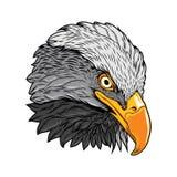 Flaming of Eagle Head, Head of Eagle Vector Illustration, Isolated Vector - Mascot Logo stock illustration