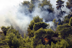 Flaming forests - Athens. Flames spread in forest outside athens stock photo