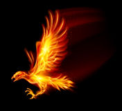 Flaming Hawk. Illustration on black background for design Stock Photography