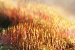Flaming Moss Royalty Free Stock Photo