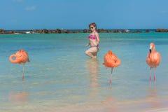 Flaming plaża Aruba fotografia stock