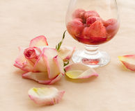 Flaming Strawberry and ailing rose Stock Photos