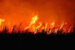 Flaming sugar cane Stock Photos