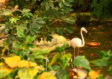Flaming w tropikalnym azjata parku Zdjęcie Royalty Free