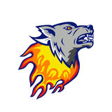 Flaming Wolf Head on Fire Isolated. Illustration of an angry flaming Wolf head on fire viewed from side on isolated background done in retro style Stock Photos