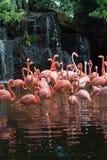 flaminga basen Zdjęcia Royalty Free