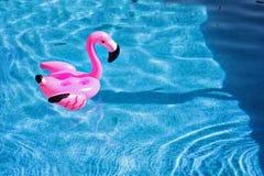 Flaminga pławik w basenie zdjęcie stock