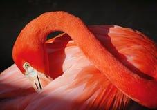 flaminga pozy joga Obrazy Royalty Free