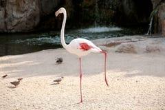Flaminga ptak w piękny nastrojowym cieszący się słonecznego dzień fotografia royalty free