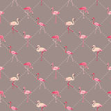 Flaminga ptaka tło Obraz Stock