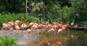 flaminga raj Obraz Stock