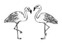 Flaminga rytownictwa wektoru ptasia ilustracja Obrazy Royalty Free
